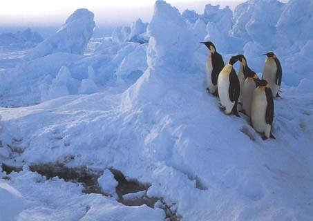 photo of of emperor penguins beside an ice-crack